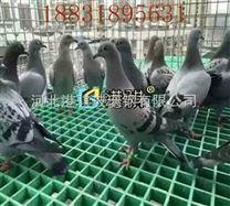 养殖玻璃钢格栅厂家-港骐
