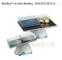 Benchmark BioMixer管式混合仪B3D1320-E