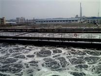 污水厂污泥干化脱水处理
