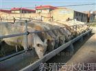 洗羊毛污水处设备产品发货乌鲁木齐市