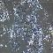 兔肝内胆管上皮细胞