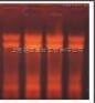 大提柱式真菌RNAOUT