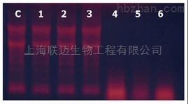 固相RNase清除剂