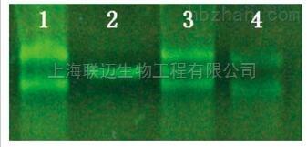 非酶DNA清除剂-2