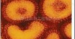 一管式病毒DNA-RNAout