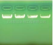 大提柱式质粒 DNAout
