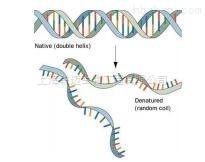 DNA探针变性液
