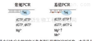 即用型易错PCR试剂盒
