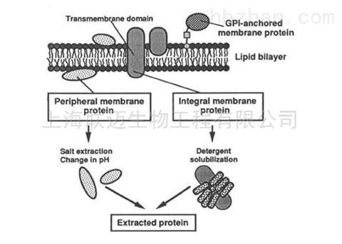 动植物膜蛋白微量制备试剂盒