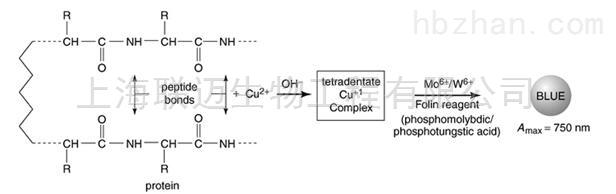 改良Lowry法蛋白定量试剂盒