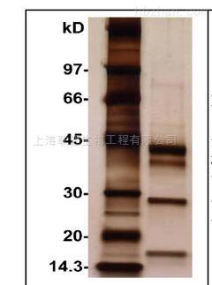 质谱兼容型蛋白银染试剂盒