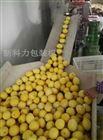 广西柠檬自动包装机
