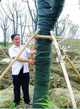 花木养护防寒带