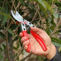 广传苹果树剪刀葡萄枝条剪粗枝剪