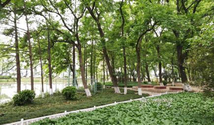 环境史话:那些影响中国环境保护进程的重要会议
