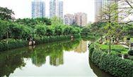 廣州市曉港湖:重構水體生態,打造水下森林