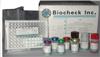 大鼠神经营养因子-3(Neurotrophin-3)试剂盒